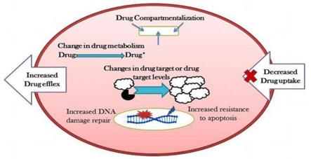 肿瘤与药物研究解决方案