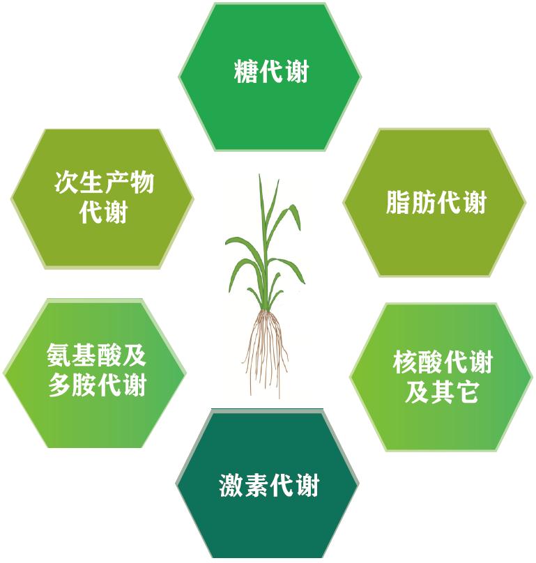 植物应对非生物逆境控机制解析