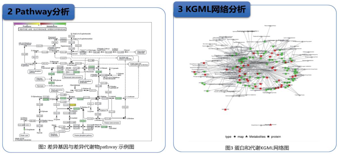 4D蛋白组+双平台全谱代谢组